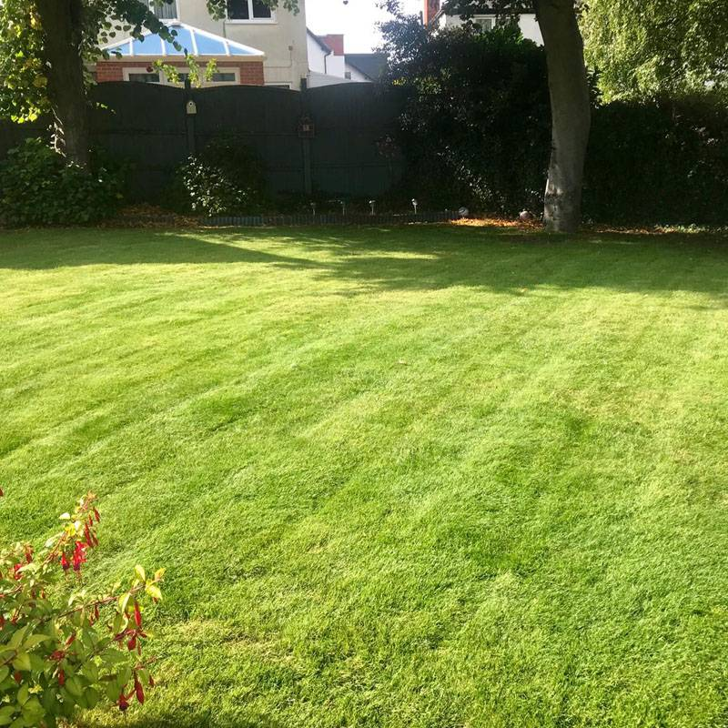 Lawntec lawn treatment in mansfield