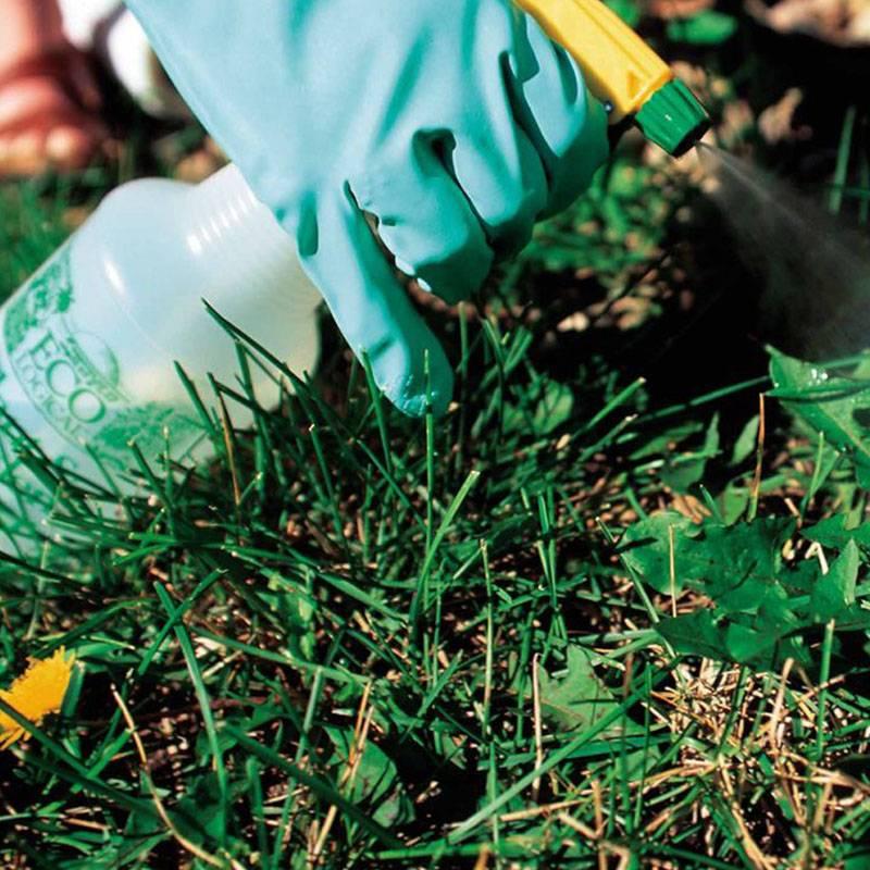 weed killing lawntec mansfield