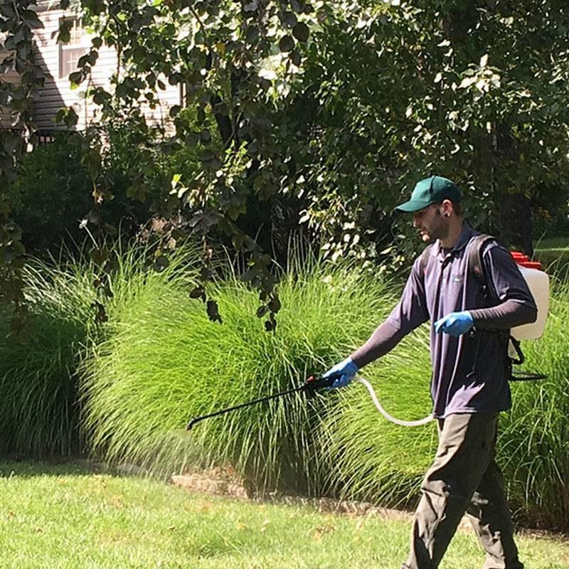 Lawnpest Spraying Lawntec mansfield